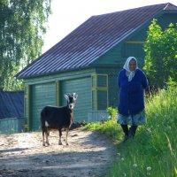 Бабушка Соня и  Пеструшка. :: Святец Вячеслав