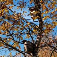 Готовь сани летом, а скворечники  осенью! :: Фотогруппа Весна.