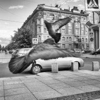 Танец :: Александр Максимов