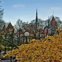 Таллин, осень :: Ольга Маркова