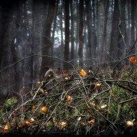 Последние листья осени... 3. :: Андрей Войцехов