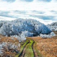 Предвестники зимы :: Сергей Радин