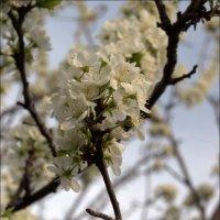 весна.. :: Юлия Березкова