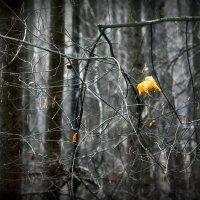 Последние листья осени... 4. :: Андрей Войцехов