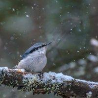 Вот и снег :: Анатолий