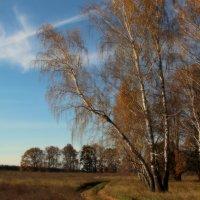 Осенняя береза. :: Маргарита ( Марта ) Дрожжина