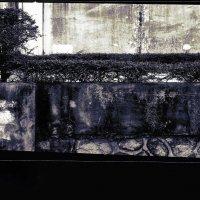 Цветы на бетоне. Шенжень. Китай :: Николай Семёнов