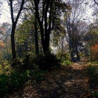 """Осень в парке """"Аскольдова могила"""" Фото №2 :: Владимир Бровко"""