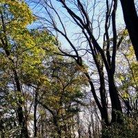 """Осень в парке """"Аскольдова могила"""" Фото №4 :: Владимир Бровко"""