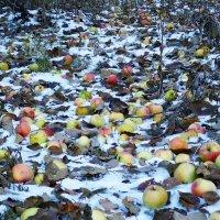Забытый урожай :: Татьяна Нижаде