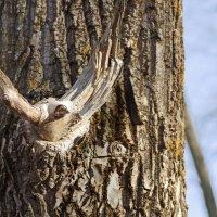 Птица на дереве :: Валерий Талашов