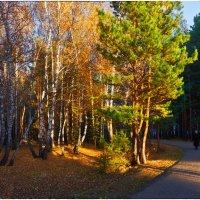 По тихим парковым дорожкам.... :: Сергей Бережко