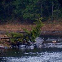 река ЯНИС... :: Ольга Cоломатина