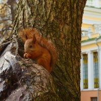 Маленький житель парка :: Татьяна Наманюк
