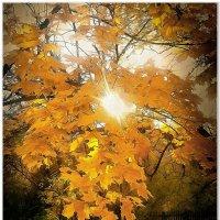 Осень :: Евгений Кочуров