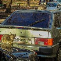 Auto cats. :: Яков Реймер
