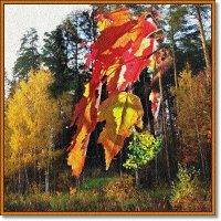 Осеннее настроение :: Лидия (naum.lidiya)