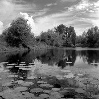 Вотчина черепахи Тортиллы :: Dr. Olver  ( ОлегЪ )