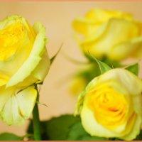 Чайные-чайные розы :: YURII K