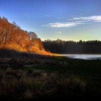 В лесу на закате.... :: Андрей Войцехов