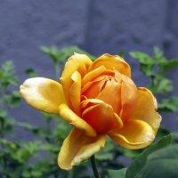 Золото сентября :: solv13 Лариса