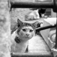 Стамбульский кот :: Ирина Лепнёва