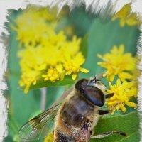 Пчелайн :: Deathёнок Death