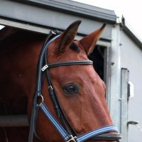 Лошадь в трейлере :: Евгения Кирильченко