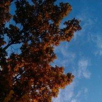 Осень в городе :: Margarita Pavlova