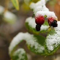 Первый снег :: Ekat Grigoryeva