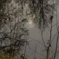 Отражение - 8 :: Александр Петров