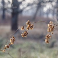 Осенний цветок... :: Андрей Зайцев