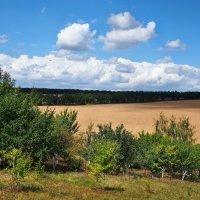 Дачный пейзаж :: Александр Резуненко