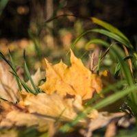 Листья желтые... :: Ната Анохина