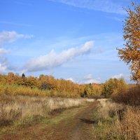 Осень :: Янгиров Амир Вараевич