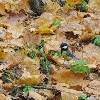На фоне осенних листьев... :: ТАТЬЯНА (tatik)