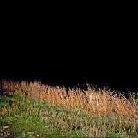 что видно в темноте :: Валерия Скиба