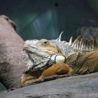 Потомок динозавра. ))) :: Михаил Болдырев