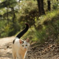 Прогулка по лесу :: Biget