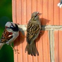 очередь :: linnud
