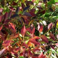 Краски осени в саду... :: Тамара (st.tamara)