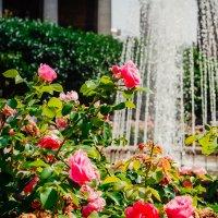 rosesandfountain :: Valeria