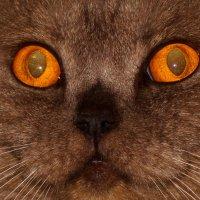 Просто глаза. :: Андрей Головин