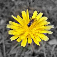 Последние цветы осени :: Лиана Сашина