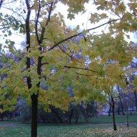 Осень 4 :: Марина Домосилецкая