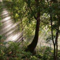 Вода и солнце :: Анастасия Богатова