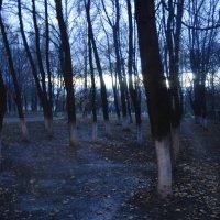 Завораживающая осень :: Надюшка Михальчишина