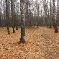 Последний день октября-2014 - IMG_3901 :: Андрей Лукьянов