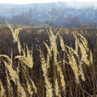 И льется чистая и теплая лазурь на отдыхающее поле... / Ф. И. Тютчев / :: Валентина ツ ღ✿ღ