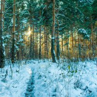 Сквозь деревья :: Ярослав Афанасьев
